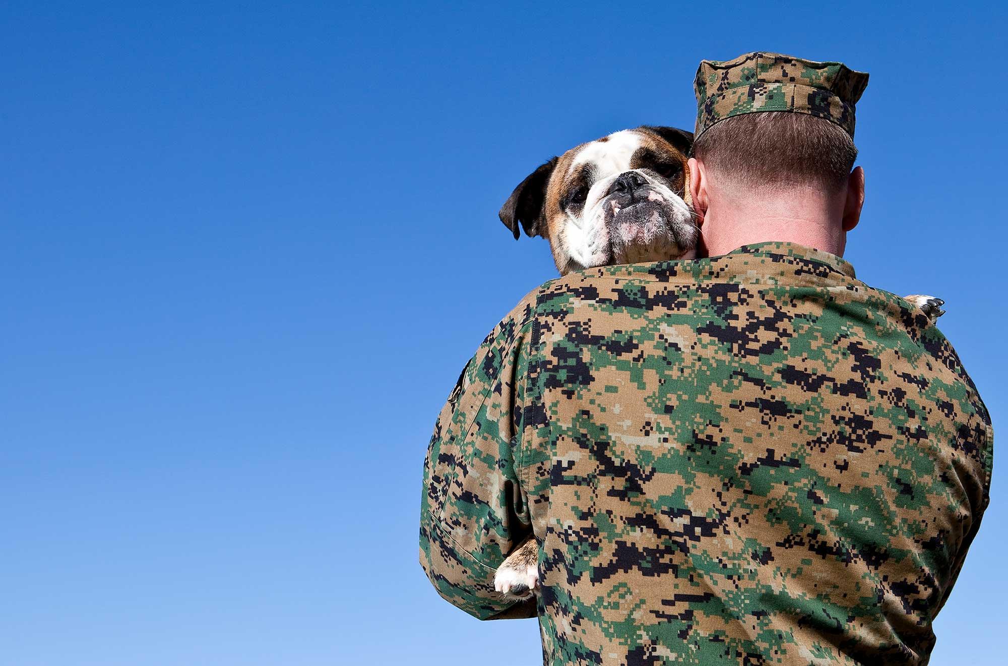 canine veterans