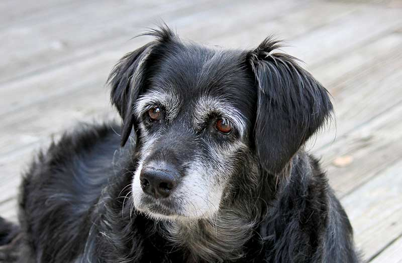 Senior pet care is different than regular pet wellness