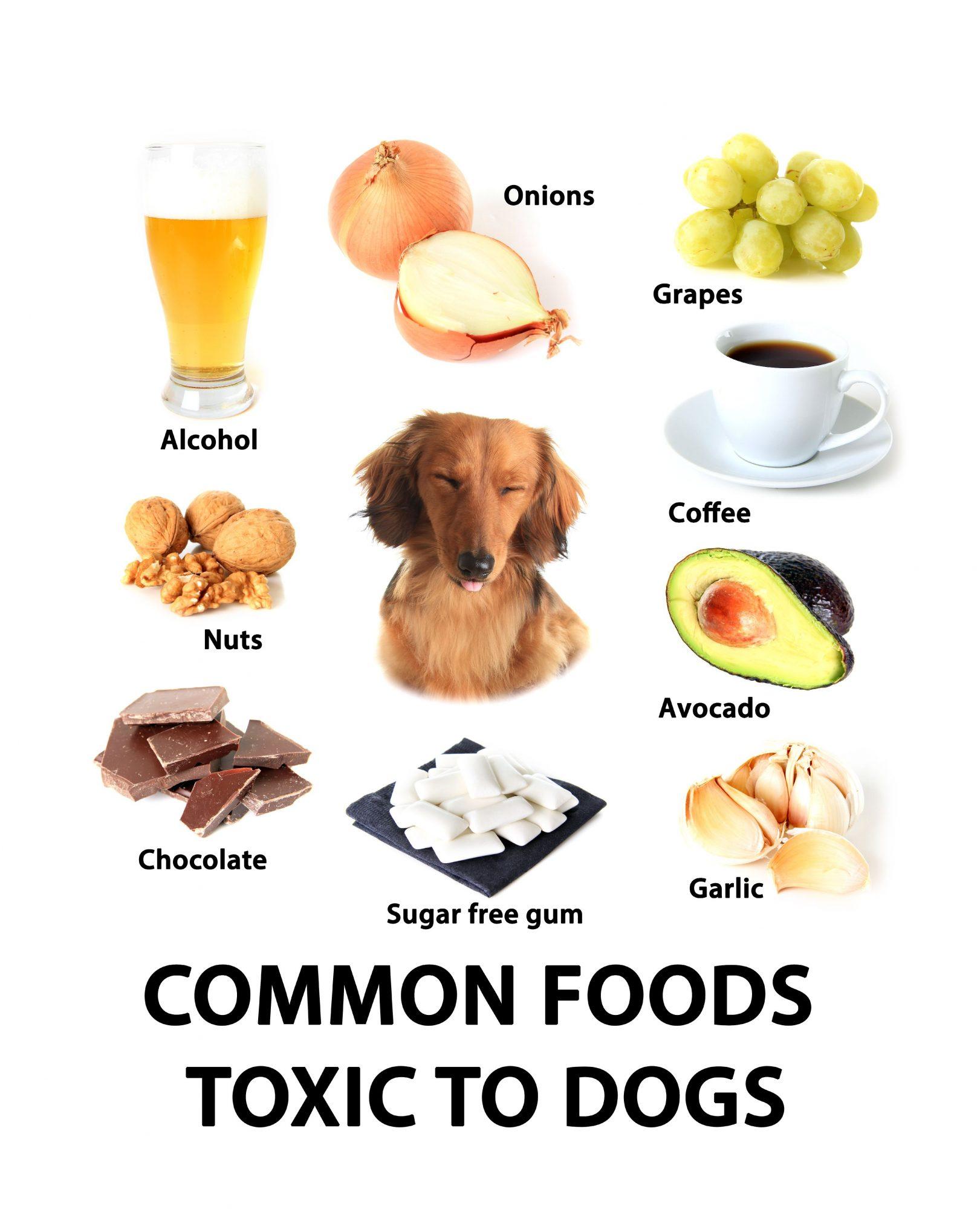 Prevent Pet Poisoning.