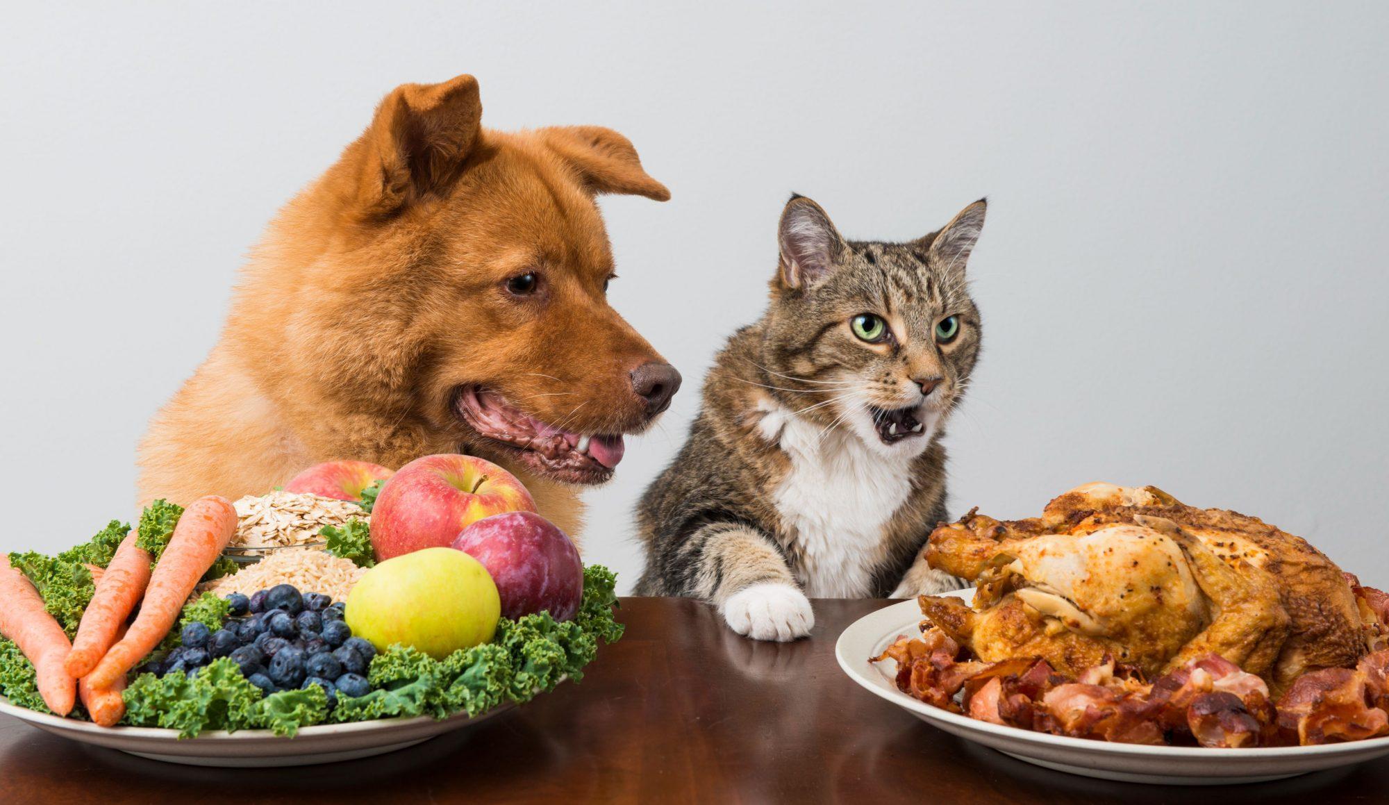 San Antonio cat and dog at holiday meal.